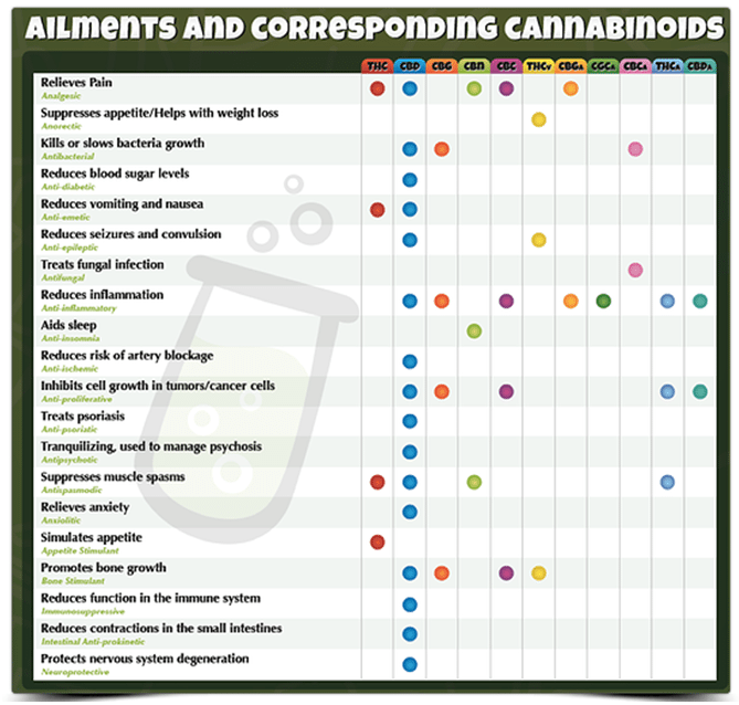 Potential Antipsychotic Properties Of Central Cannabinoid (cb1) Receptor Antagonists 2017