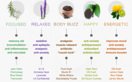 Terpenes: what can they do for you?