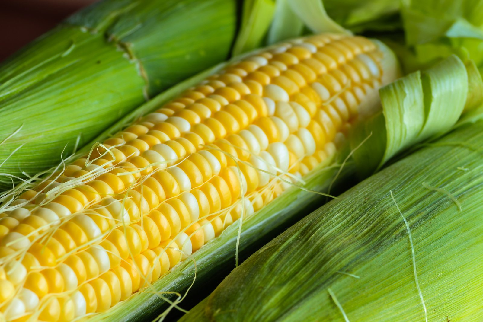 Sweet yellow corn on cob with leaves and husk